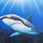 aero shark belton
